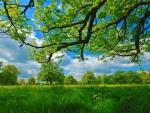~Nature~