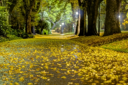 Park - fall, autumn, warm, seasons, parks, path, nature, forests, road