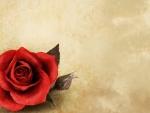 Rose in the Corner