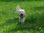 Adog & his ball
