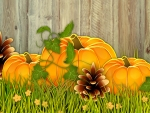 Pumpkins by the Fence