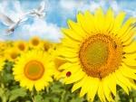Peaceful Sunflowers