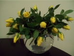 lovely yellow tulips