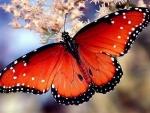 wonderful red wings