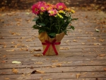 Flowers for you ♥