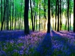 Blue forest wildflowers at dawn