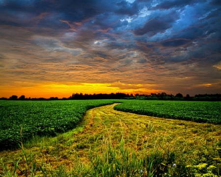 Beautiful Scenery - grass, field, nature, sky