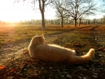 Red_Cat_lying_on_the_road_in_autumn