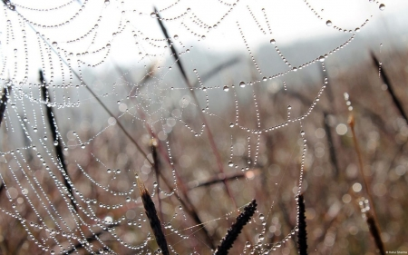 Spiderweb - fall, autumn, grass, raindops, drops, spiderweb, photography, web, wallpaper, close-up, dew, abstract, dewdrops, macro, garden, rain, meadow, field
