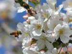 springtime blosoms
