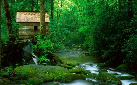 cabin above a green forest stream - forest, stream, rocks, moss, cabin, sluice