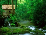 cabin above a green forest stream