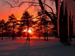 spectacular red sunset on a frozen forest