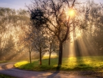 sun beams through trees by a countryside road hdr