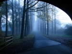 tunnel to an alley of trees in the mist