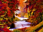creek in a colorful autumn forest