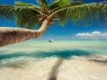 Beautiful Palm Tree Over Caribbean Sea