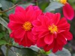 Full Bloom Flowers FC