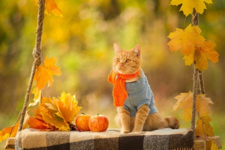 Image result for cat autumn