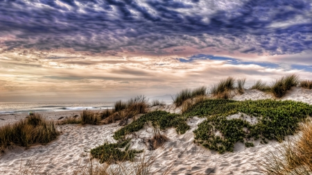 grassy sand dunes on a beach hdr - beach, sand, dunes, hdr, clouds, sea