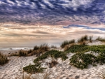 grassy sand dunes on a beach hdr