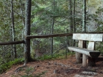 bench in a forest clearing