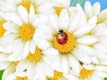 ~ pretty daisies ~