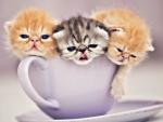 Cup of cuties