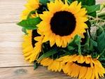 Sunflowers on Deck