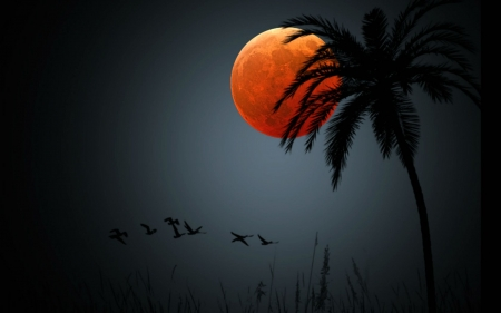 Full Moon in the Tropics - birds, tree, nature, moon