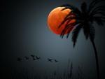 Full Moon in the Tropics