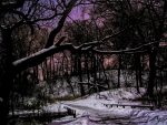 pink winter night in a forest hdr