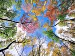 Symphony of colors