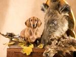Dachshund gone hunting