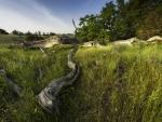 dead trees in a green field
