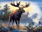 Northwoods Moose F
