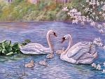 Swan Family F