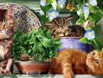 Kitten Garden - Cats F