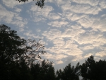 Sky&Trees