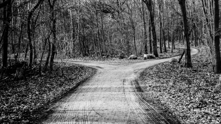fork in a forest road - intersection, forest, road, BW