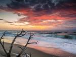 Dusky Beach