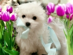 puppy among the flowers