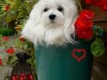 A Bucket of Love