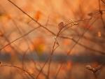 Autumn morning light macro