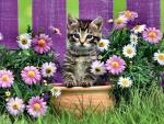 Purrfect Purple Flowers - Cat F