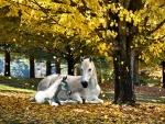 Autumn Treasure - Horse F1