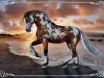 Overo Paint Horse on Beach f