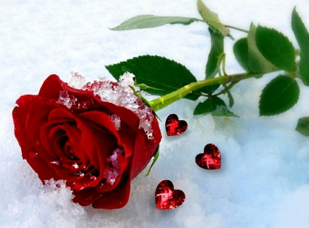 To Make You Feel My Love Flowers Nature Background Wallpapers On