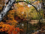 In Dreams Of Fall