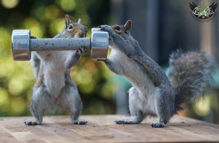 Do squirrels even lift? - gym, cute, max ellis, squirrel, lift, funny, couple, animal